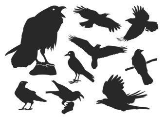 Raven and Crow Silhouette