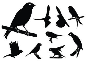 Canary Bird Silhouette Set