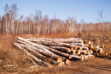 Trees Logs Sit Stacked Northern Minnesota Logging Operation