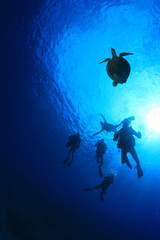 Scuba diving with sea turtle silhouette