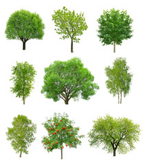 Great collection of deciduous trees isolated