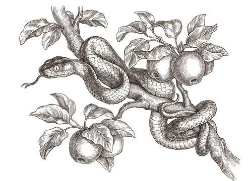 Рисунок тушью, змея на ветке.