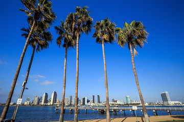 Skyline of San Diego and Palm Trees