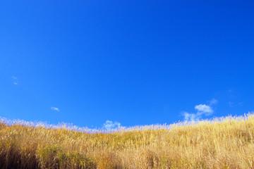 草原と青き空、Grassland and Blue sky