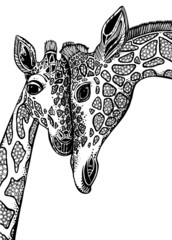 Vector graphic illustration with two giraffes in love.