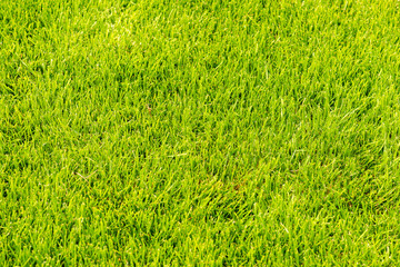 Green grass closer view