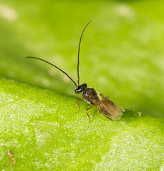 fly on a green leaf in nature. close-up