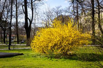 Planty park walk in springtime, Krakow Poland