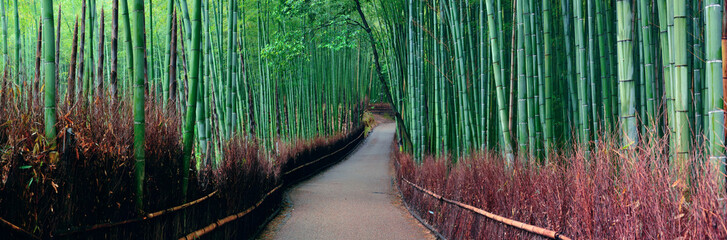 Canvas Prints Kyoto Bamboo Grove
