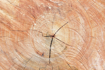 Cut of old trunk is photographed closely. The core of tree consi