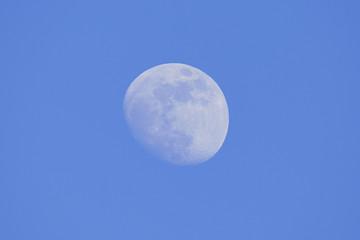 Waning gibbous moon during daytime