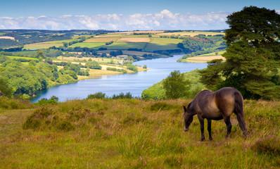 Pony at Wimbleball Lake Exmoor National Park Somerset