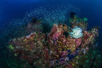Coral Reff
