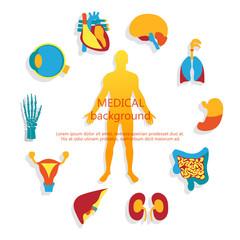 Medical background. Human anatomy.