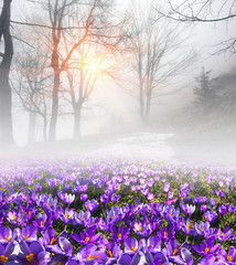 Saffron in the fog