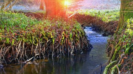 flower creek