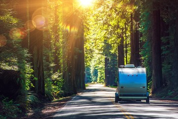 Tuinposter Kamperen Camping in Redwoods