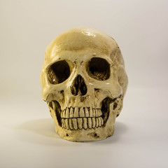 skull on the white background