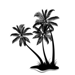 Palm trees silhouette isolated on white