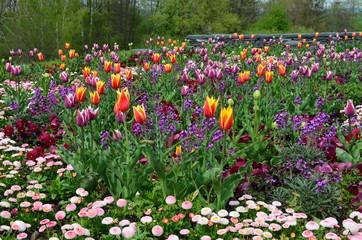 Frühlingsblumenmix weitläufig