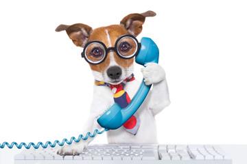 Obraz dog on the phone - fototapety do salonu