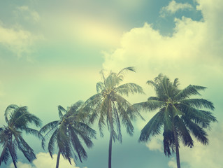 palm trees on the background of sky image with retro toning