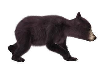 Black Bear Cub
