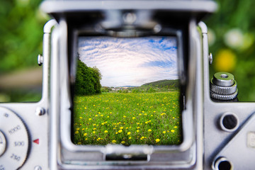 Taking a picture by old camera on meadow with dandelion flowers