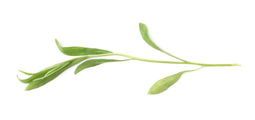 Tarragon perennial aromatic culinary herb