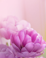 Toned Blurred Flower Background.