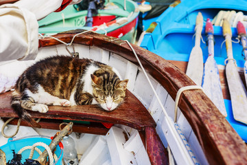Cat sleeping in the boat at the marina