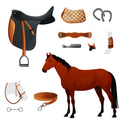 Set of equestrian equipment for horse.