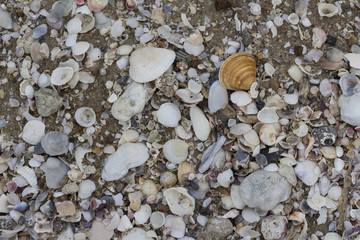 Multiple shells on the beach, background