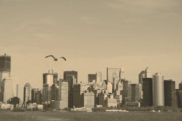 Seagull and South Manhattan