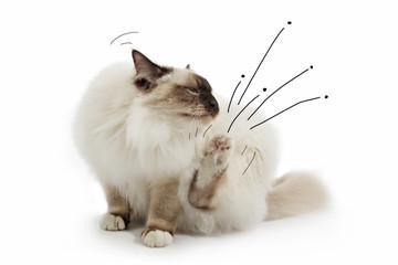 chat se grattant avec dessin de puces