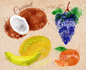 Fruit watercolor coconut, melon, mandarin, dark grapes kraft