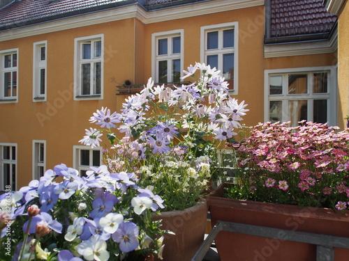 bl hende balkonpflanzen im dachgeschoss fotos de archivo On blühende balkonpflanzen