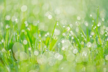Dew drops background