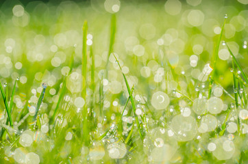 Dew drops background