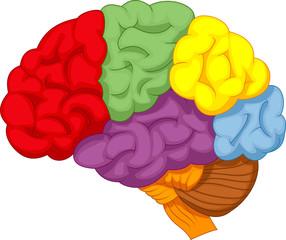Cartoon colorful brain