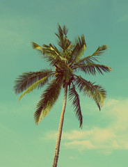 coconut palm - vintage retro style