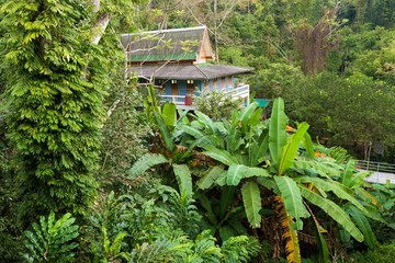 Home in deep jungle