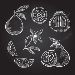 hand drawn pomelo fruits