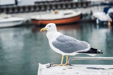 Mouette posée sur un bateau