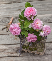 Bouquet of wild rose