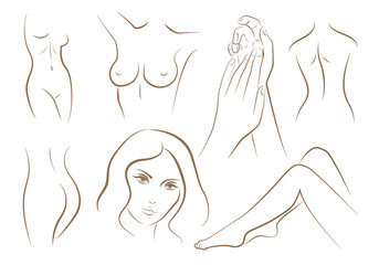 Set of woman body parts, vector