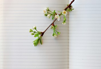 blooming spring tree branch on empty copybook page