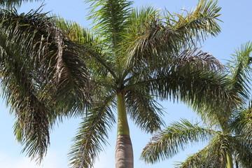 Palms of Caribbean