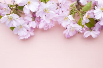 Tree cherry.