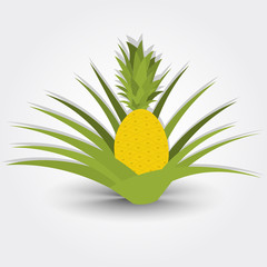 Pineapple tree isolated on a gray background with shadow.